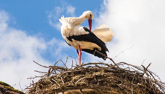 stork-ibab-november-2016